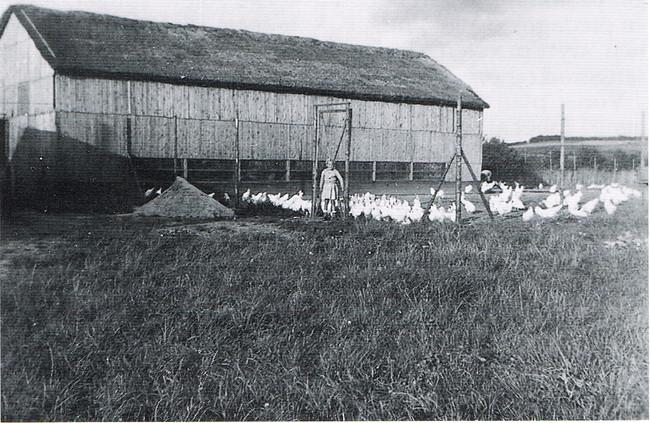 Hønsegaard